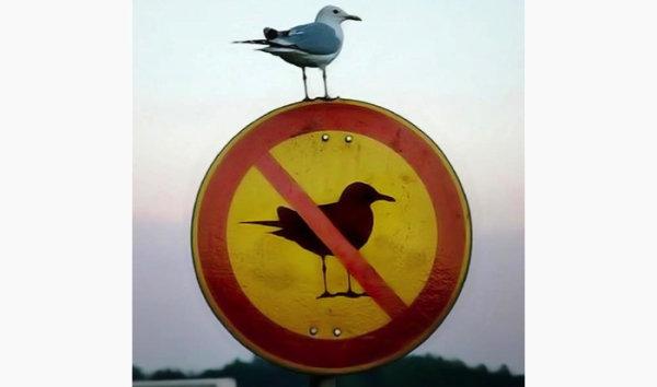 Las normas de tráfico más locas del mundo