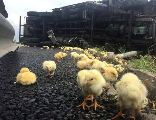 Soprendentes cargas de camiones perdidas en accidentes
