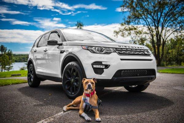 Cómo transportar en el coche a tu mascota